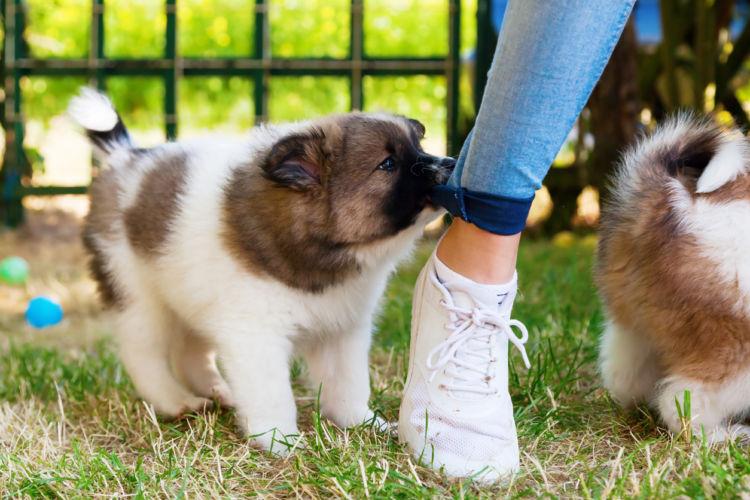 口を使う子犬