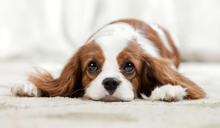 犬が飼い主を噛む【しつけ方法】「叱らない!」