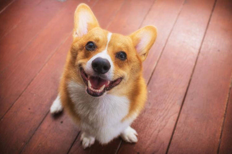 犬が飼い主を噛む【コミュニケーション】「思いやりが大事!」