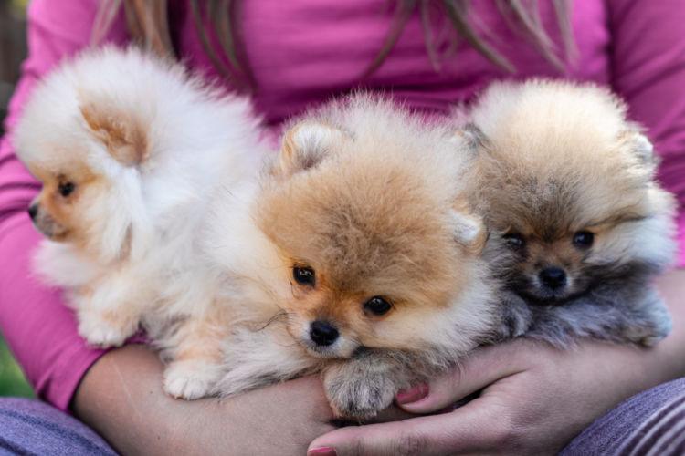 【獣医師監修】ペットショップとブリーダーどっちがおすすめ?犬を初めて購入する時の注意点!
