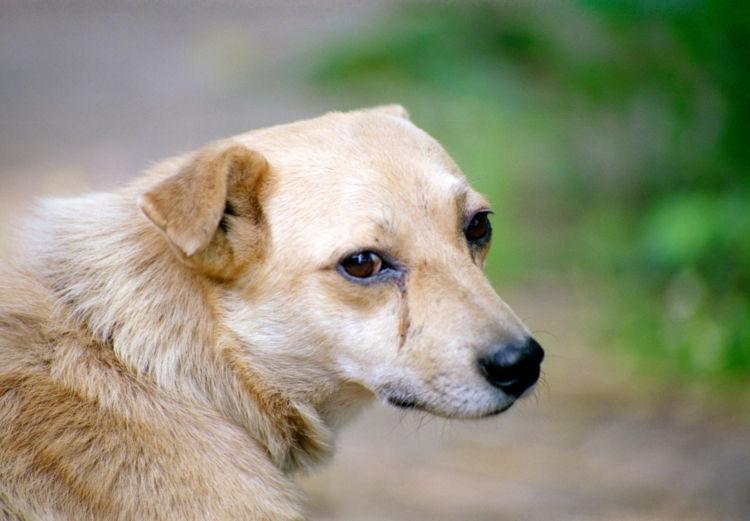 犬の目やにの色【黒、茶色】の場合