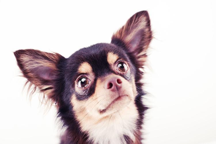 犬の目やにの色【まとめ】