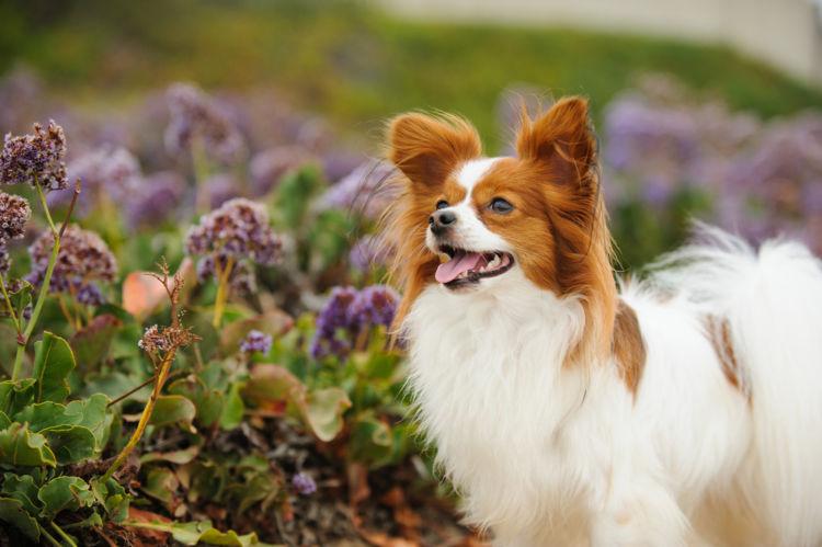 【獣医師監修】犬の「含歯性嚢胞」原因や症状、なりやすい犬種、治療、予防方法は?