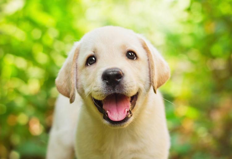 犬の変形歯(へんけいし)【まとめ】