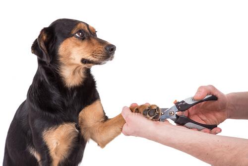 犬の爪切りが苦手な人に教えたい、犬の爪切りを簡単にするコツ