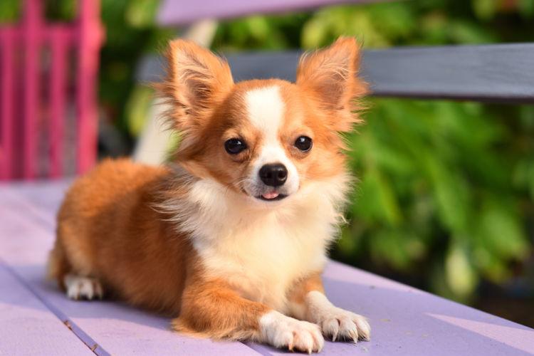 犬の含歯性嚢胞(がんしせいのうほう)【間違いやすい病気は?】
