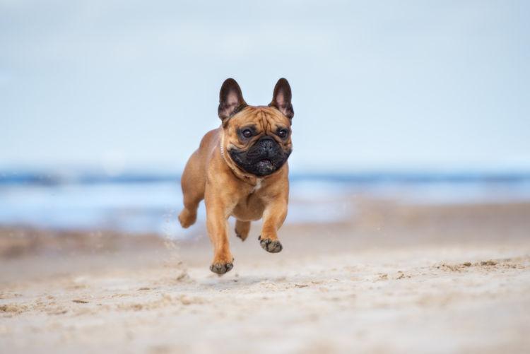 犬の歯の発育障害(エナメル質形成不全)【発症しやすい犬種】
