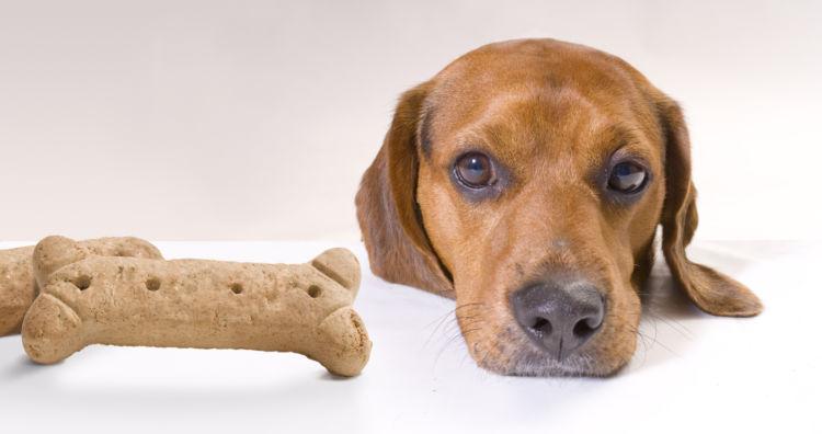 犬にとって「見た目においしい」はあまり関係ない