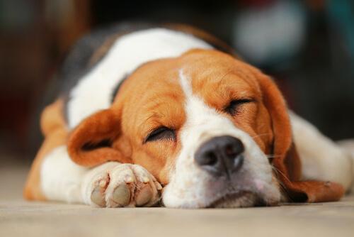 留守番でストレスを感じないためにできる、サークルを上手く活用した犬のしつけ