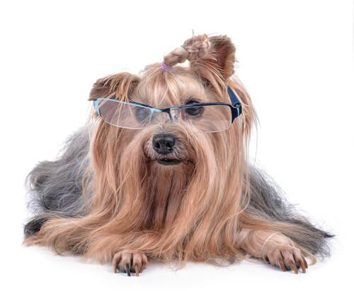 これから犬を飼う人が知っておきたい、病気になりにくい犬種の選び方