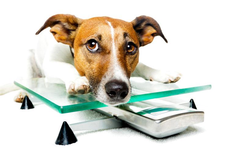 犬の前十字靭帯断裂【予防対策】