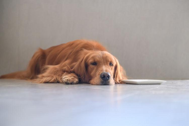 犬の腎不全とは?