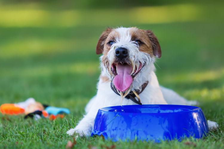 【獣医師監修】犬の「糖尿病」原因や症状、なりやすい犬種、治療方法、予防対策は?インスリンの働きとは?