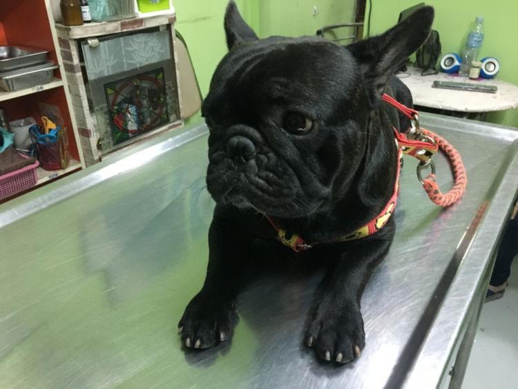 犬の糖尿病と間違えやすい病気