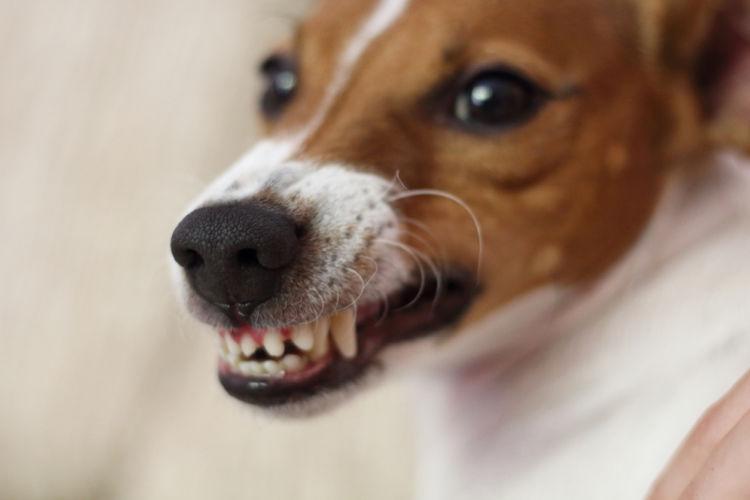 犬の甲状腺機能亢進症
