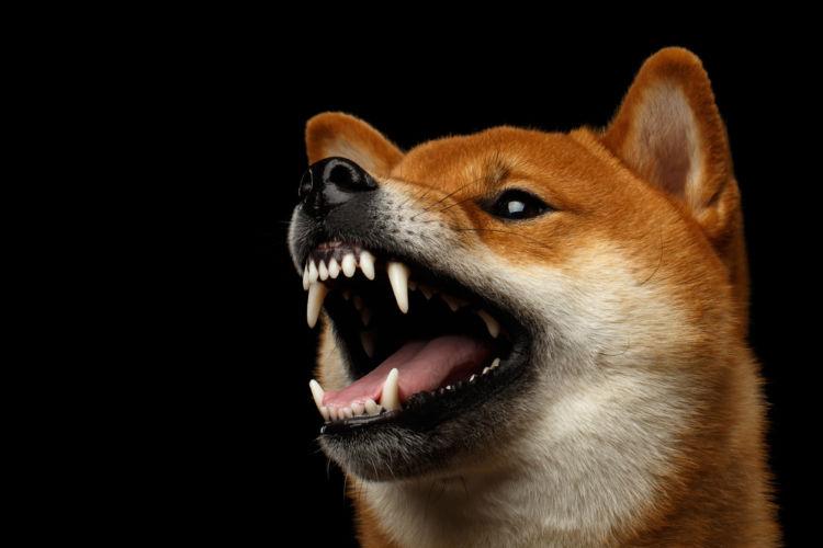 【獣医師監修】「犬が夜鳴き(夜泣き)」をする。考えられる原因や症状、おもな病気は?