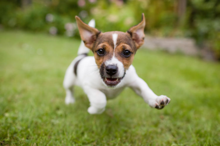 犬の埋伏歯【予防対策】