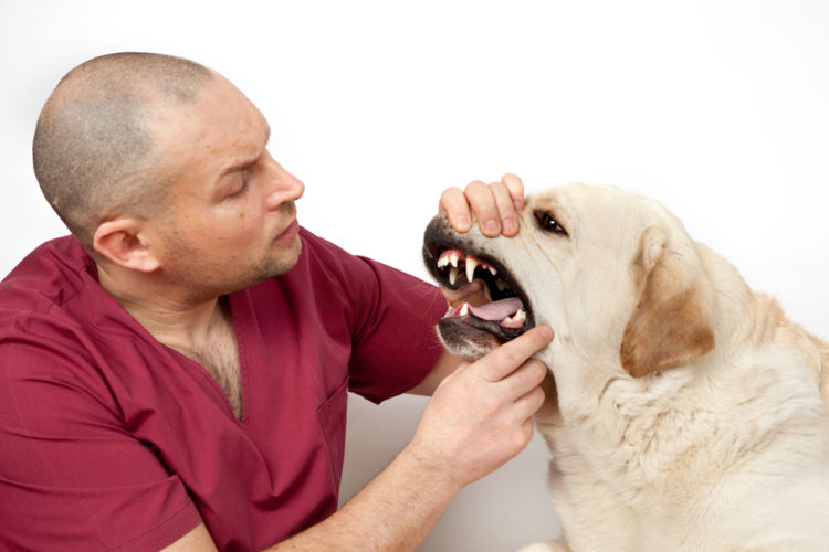 犬の乳歯遺残【診断方法】