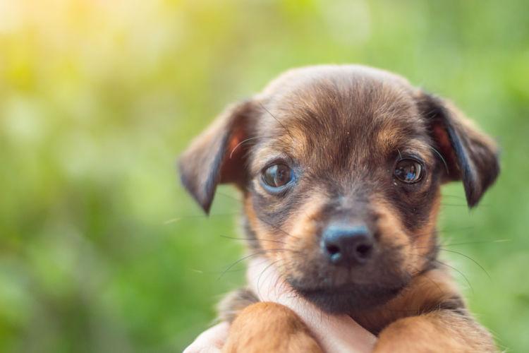 【獣医師監修】子犬の生後4カ月までのしつけ、育て方のコツは?スキンシップと社会化が重要!