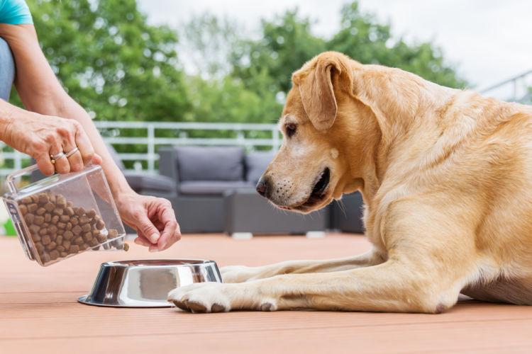 「肉副産物」は犬にとって安全?
