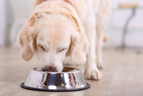手作りご飯の基礎知識!魚が犬にもたらす、肉では摂取出来ない貴重な栄養素