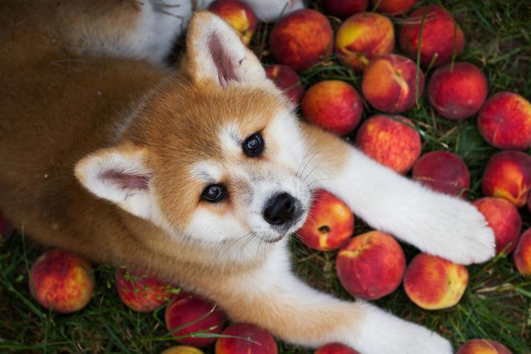 桃のおもな栄養素
