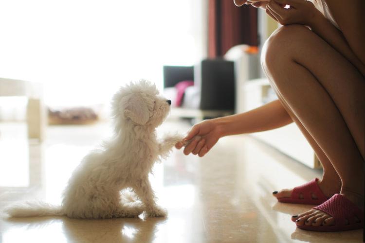 日本独自の「ペットフードの安全を守る法律」