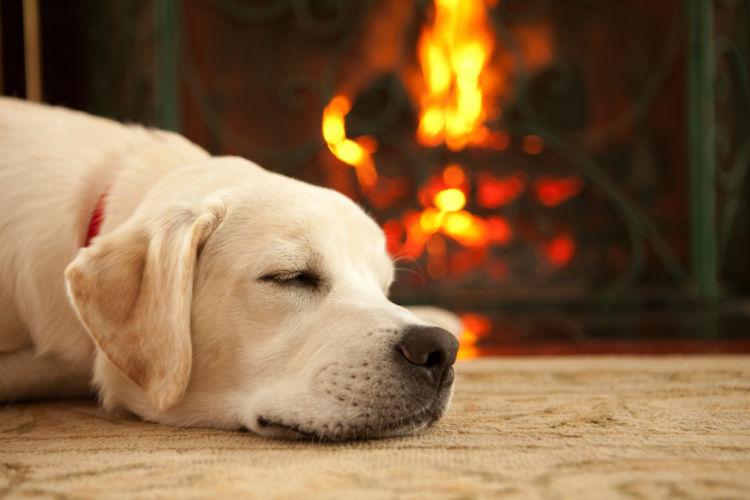 犬が昏睡している【考えられる原因】