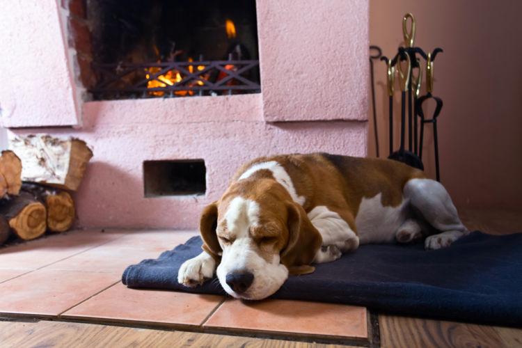 犬が昏睡している【この症状で考えられるおもな病気】