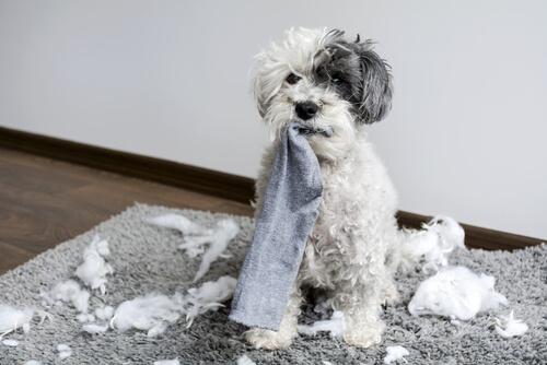 なぜ、犬は靴下が好きなのか?答えは「犬が好むにおい」にあった