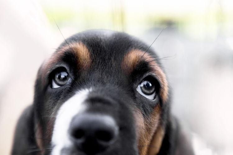 ビタミンA(レチノール)で犬の目を健やかに