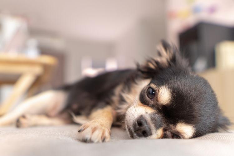 桃の「種」による犬の中毒症状