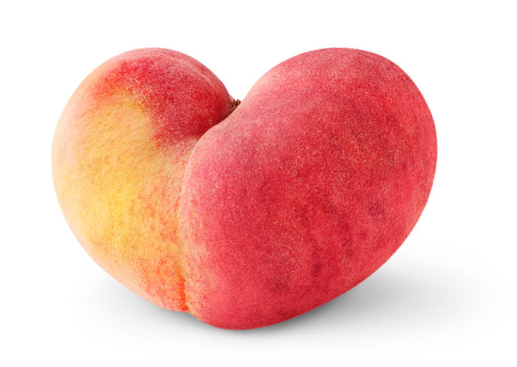 愛犬に与える「桃」のまとめ