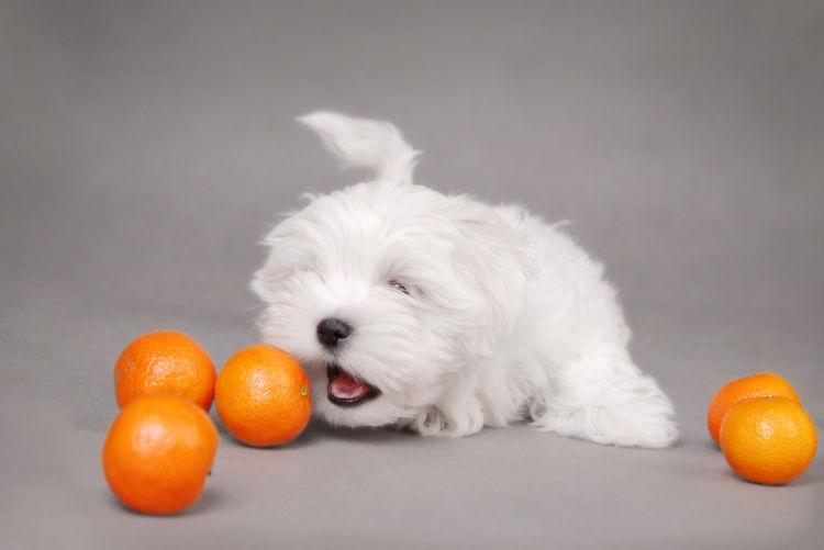 犬はオレンジを食べても大丈夫!ただし「皮」や「種」、アレルギーには注意!