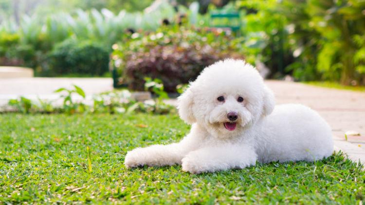 犬の副腎皮質機能低下症(アジソン病)【症状】
