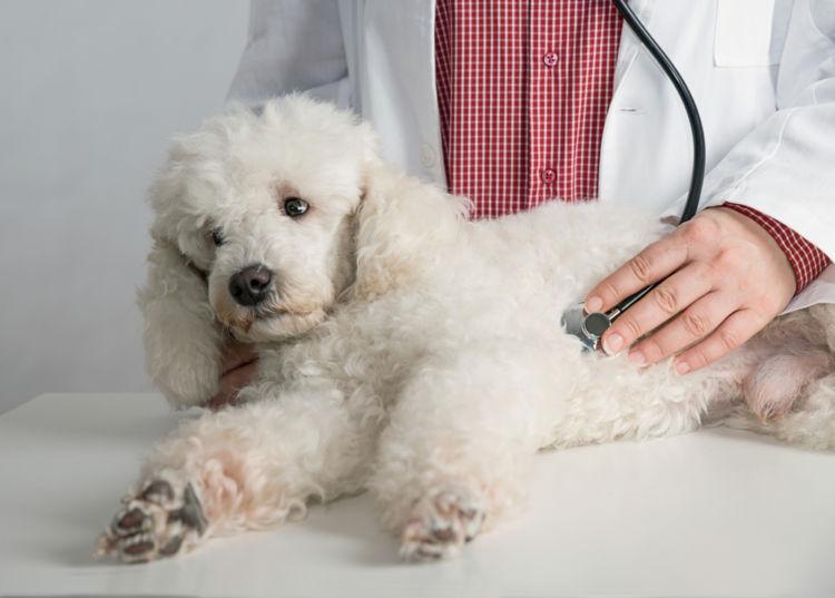 犬の副腎皮質機能低下症(アジソン病)【診断方法】