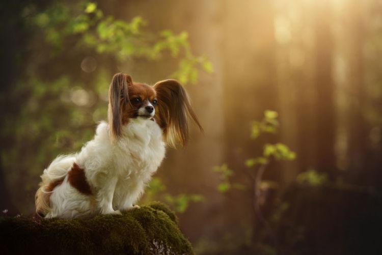 犬の副腎皮質機能低下症(アジソン病)【予防対策】