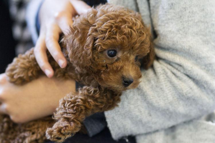 犬の副腎皮質機能低下症(アジソン病)と間違えやすい病気