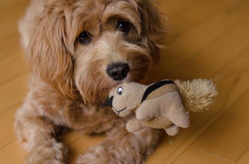 かわいくても、やっぱり痛い!犬が甘噛みをやめない理由とやめさせる方法
