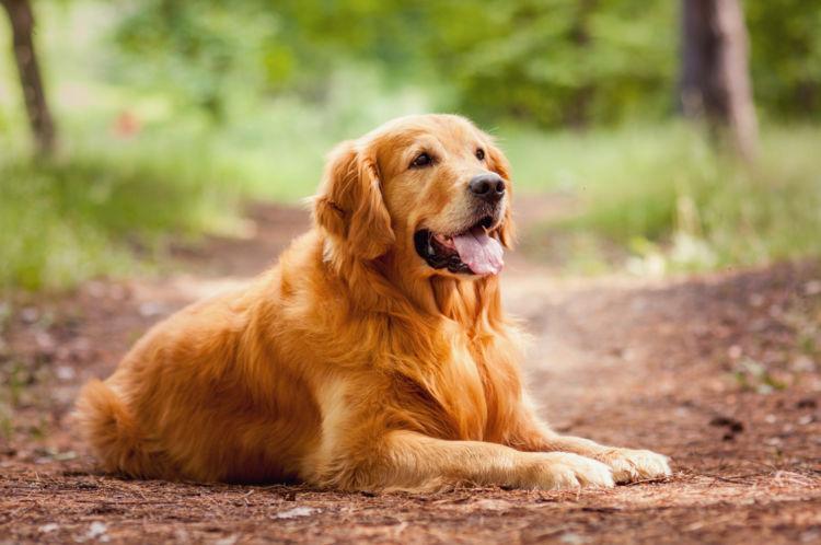 【獣医師監修】犬の「ガマ腫」原因や症状は?対処・治療法、手術費用、予防対策は?