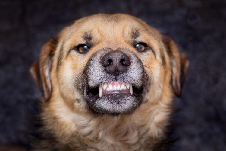 犬の不正咬合【症状】