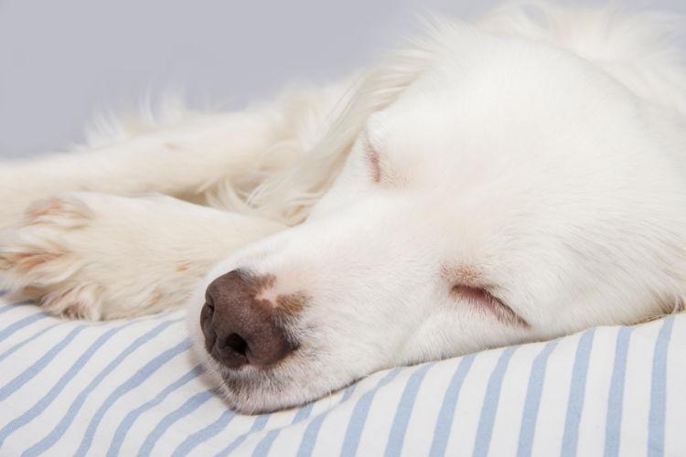 犬が痙攣を起こした・口から泡を吹いている【考えられる原因】