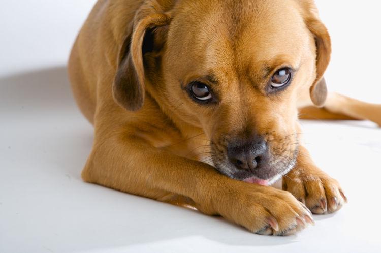犬が手足を気にしている【考えられる原因】