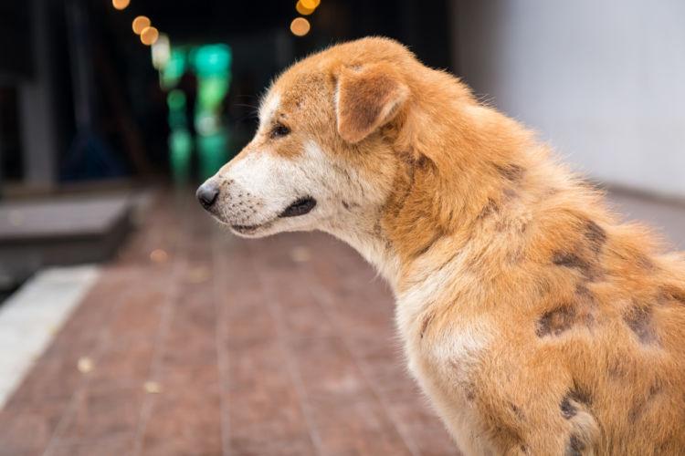 犬の食物アレルギー