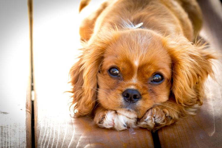 犬の脊髄空洞症【症状】