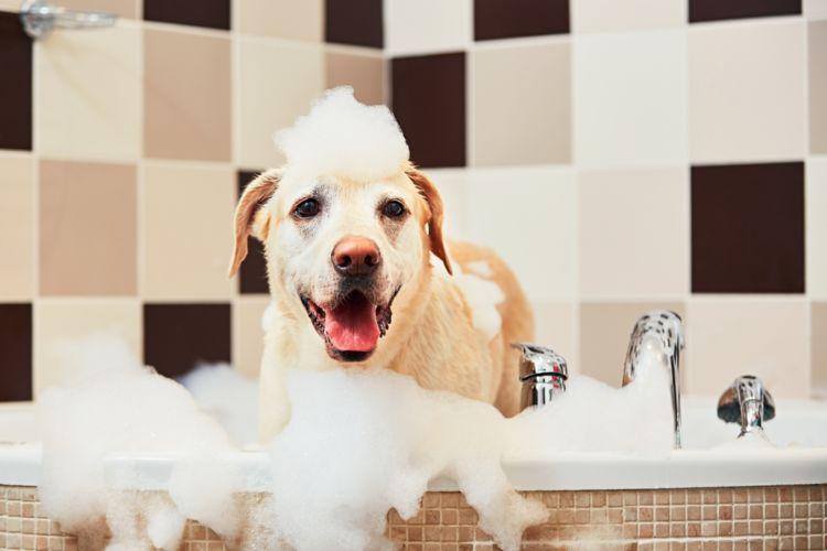 犬のマラセチア皮膚炎【治療方法】