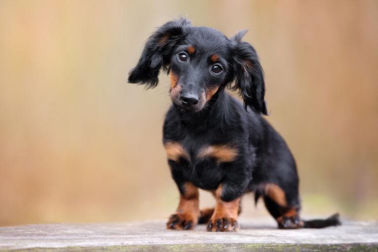 【獣医師監修】犬の「皮膚糸状菌症(人獣共通感染症)」原因や症状、治療法(シャンプー)、予防対策は?