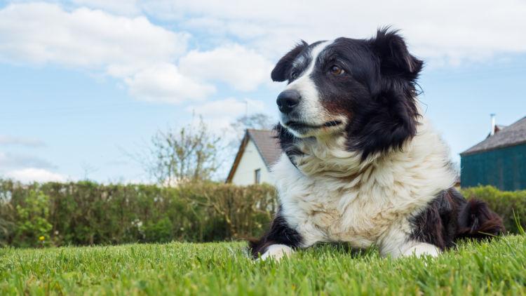 犬のコリー眼異常と間違えやすい病気