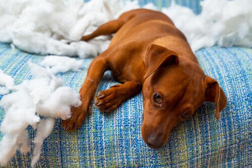 犬の「助けて」を見逃さないで!愛犬のしぐさからストレスのサインを読み解く方法