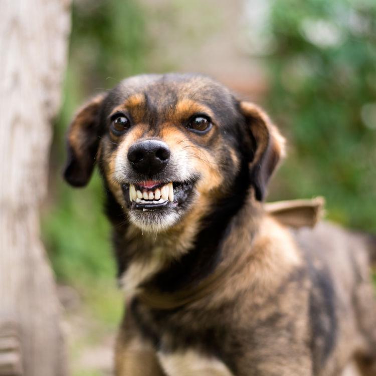 犬の不正咬合の治療目的